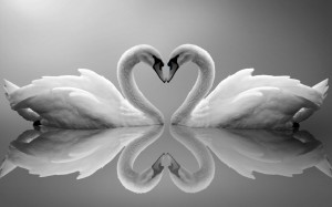 PHOTO Heart REFLECTION SWANS LOVE