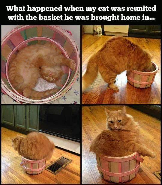Photo cat time changes shape
