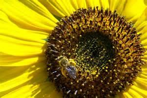 Pollen 2